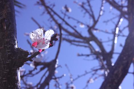 Spring fever a
