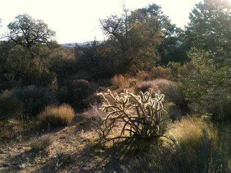 Trail run dd