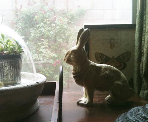Bunnies b