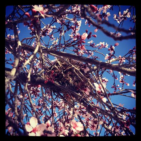 Nest blossom