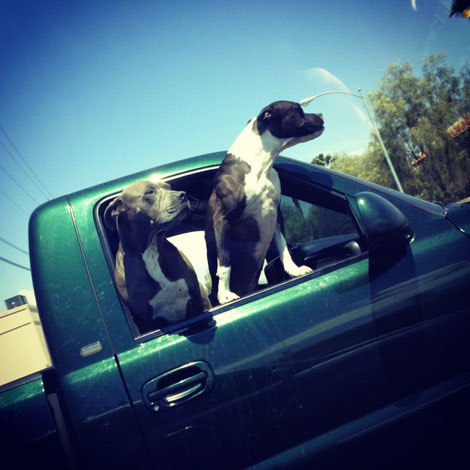 Drive puppies