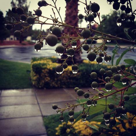 Rainy drops