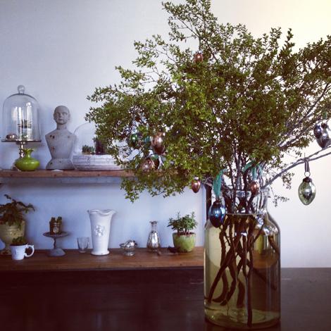 Creosote tree