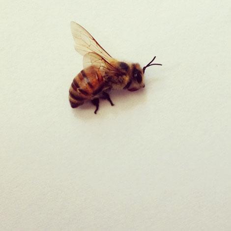 Gap bee