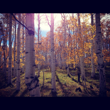 Yellow woods