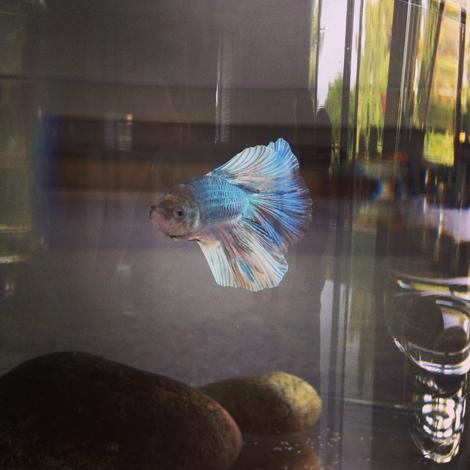 Fishie b