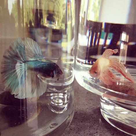 Fishie c