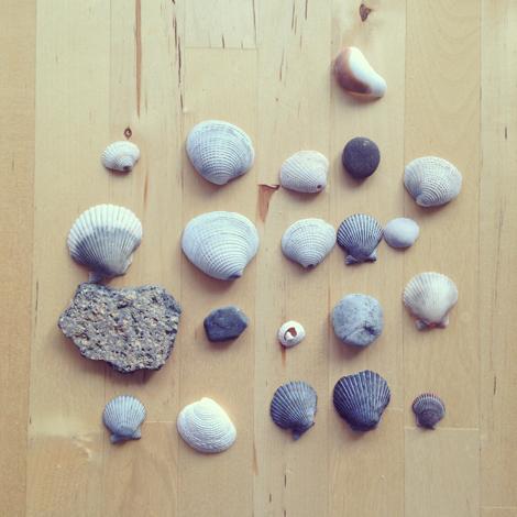 Sand dollar shells