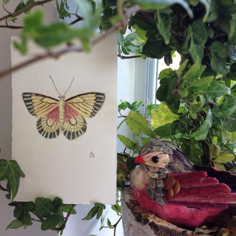 Butterflyivy