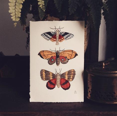 Mothys