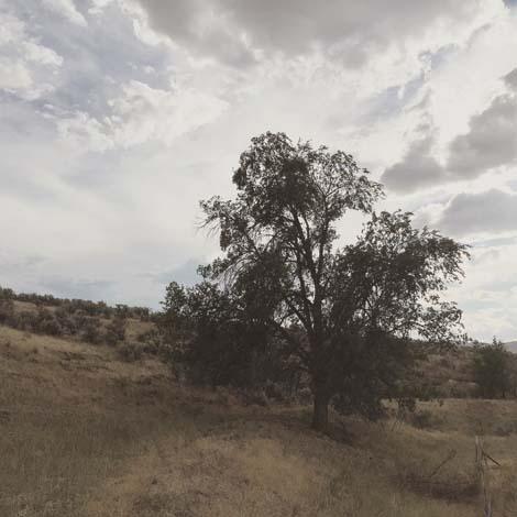 Lonetree