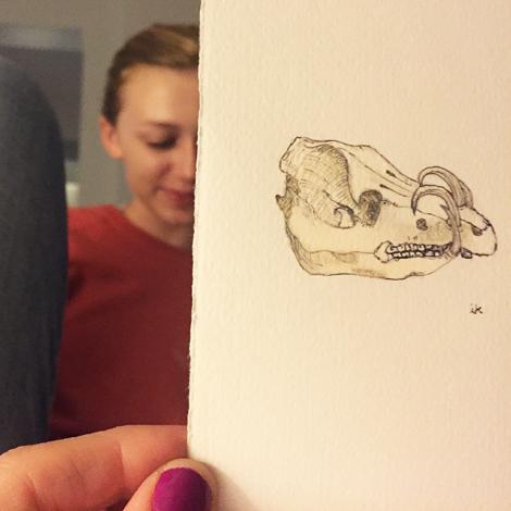 Babirusaskull